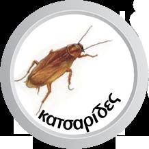 Απολύμανση κατσαρίδες