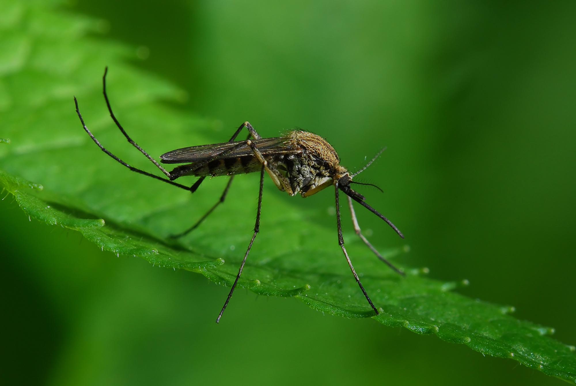 Απολύμανση Κουνούπια